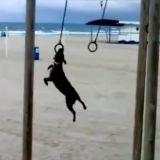 Le chien prêt pour les JO 2012 de Londres (Vidéo du jour)