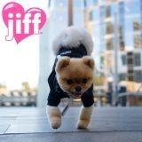 Record : un chien marchant sur 2 pattes dans le Guinness Book
