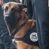 Hommage à ces chiens héroïques qui œuvrent ou ont œuvré pour la paix