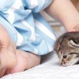 Tous les ans, ce petit garçon accueille des chatons abandonnés et devient leur papa adoptif