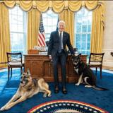 Les chiens du président américain Joe Biden ont pris leurs quartiers dans le bureau ovale