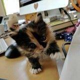 Elle accueille un chaton et l'emmène à son travail, il la remercie en donnant un coup de patte aux employés