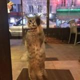Ce chat est le plus mignon des laveurs de vitres (Vidéo)
