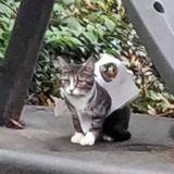 En passant dans la rue, elle fait une découverte terrifiante dans un sac plastique (vidéo)