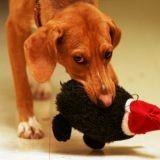 Jouer avec son chien : des conseils en video