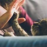 8 conseils ultra simples pour que votre chat vous aime vraiment !