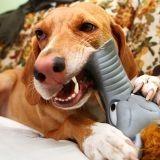 Un chien avale un jouet… en forme de chien