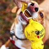 Les 5 gadgets pour chien les plus fous... et inutiles !