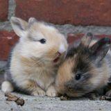 09/09/09 : La journée du lapin sur Internet ?