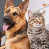 Journée mondiale des animaux 2021 : le 4 octobre tous les animaux sont célébrés !