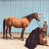Deux Terre-Neuve, un cheval, un enfant, une amitié extraordinaire à découvrir en images