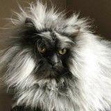 10 preuves que ce chat est encore plus grincheux que Grumpy Cat