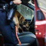 Enfermé dans une voiture de patrouille, un chien policier meurt de chaud