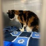 Une famille abandonne sa chatte de 17 ans et fait une demande scandaleuse au refuge