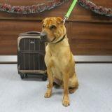 Le mystère de Kai, un chien abandonné dans une gare avec une valise contenant ses affaires