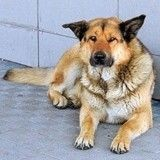 """Le """"Hachiko"""" du Kamtchatka attend désespérément son maître à l'aéroport"""