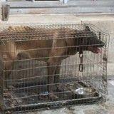 Le chien enfermé dans une fourgonnette pendant 2 ans se remet de son horrible passé