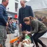 Kate Middleton et William rencontrent des chiens : l'un d'eux leur réserve une surprise qui les fait beaucoup rire