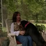 Elle aide un chien rescapé d'un accident de voiture à retrouver sa famille (vidéo)