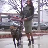 Elle cherche son chien partout pendant un an, le miracle se produit quelques jours avant Noël (vidéo)