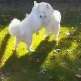Rescapés d'une ferme à viande, deux chiens se retrouvent après leur adoption