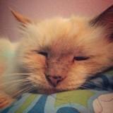 Abandonnée à 17 ans, cette chatte n'en revient pas d'avoir été sauvée (Vidéo du jour)