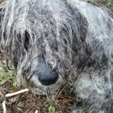 Ils trouvent un chien méconnaissable attaché au pied d'un arbre, ils le tondent et découvrent l'atroce vérité