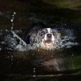 Il brave les eaux pour sauver un chien d'une maison en plein effondrement