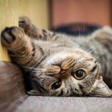Vous êtes allergique aux chats ? Ce vaccin pourrait vous changer la vie
