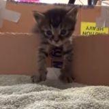 Quand des chatons s'évadent d'un carton, c'est forcément mignon ! (Vidéo du jour)
