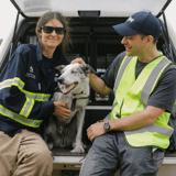 Un chien héros récompensé pour avoir sauvé des centaines de koalas lors des incendies en Australie