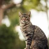 Un chat fixe le canal avec insistance, intriguée elle jette un coup d'œil et ce qu'elle aperçoit lui tire un cri d'effroi