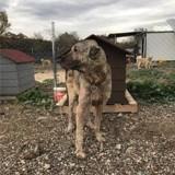 Elle voit la photo d'un chien vivant dans une décharge en Turquie et décide de le sauver