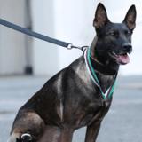 Un chien qui a perdu une patte lors d'une mission contre Al-Qaïda vient d'être récompensé