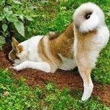 Au secours, mon chien creuse des trous dans le jardin !