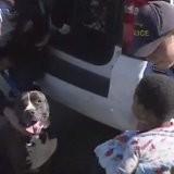 Elle promène ses chiens et croise un bébé avec un Pitbull : le comportement du toutou la laisse sous le choc