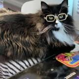 Un enfant entre dans le magasin pour choisir des lunettes, l'opticien qui l'accueille est... à quatre pattes !