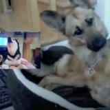 Cette chienne est réveillée par un son étrange, sa maîtresse la filme et 2 millions de personnes sont hilares (vidéo)