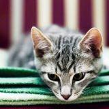 La litière de mon chat sent mauvais, que faire ?