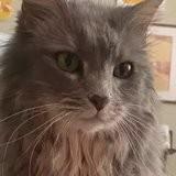 Il passe chercher son chat au salon de toilettage et explose de rire devant sa coupe « décoiffante » !