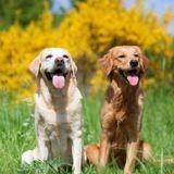 16 races de chiens qu'on confond tout le temps : apprenez à les différencier pour ne plus faire l'erreur !