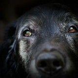 Scandale : 2 heures après son arrivée à la fourrière, un chien perdu se fait euthanasier !