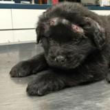 Il trouve un chien couvert de sang, le vétérinaire lui fait passer une radio et a le choc de sa vie