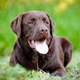 Le chien perdu de Julia Roberts, retrouvé chez un voisin grâce à une application !