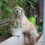 Puis-je donner du concombre à mon chien ?