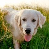Cet homme a plaidé coupable au tribunal pour sauver son chien de l'euthanasie