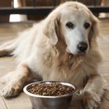Quelles sont les meilleures croquettes pour chien senior en 2021 ?