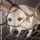 Emiliano Sala était aussi à Nantes pour s'occuper de son chien, adopté à la SPA