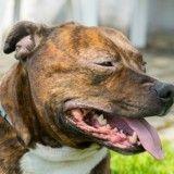 Affaire Laïko : les maîtres du chien traîné par une voiture, devant le tribunal