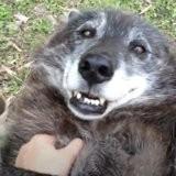 """Il affame son chien pendant des mois puis l'abandonne car """"il n'est pas assez mignon"""" (vidéo)"""